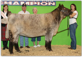 McKee's Anndelle - National Late Spring Heifer Calf Champion, NWSS